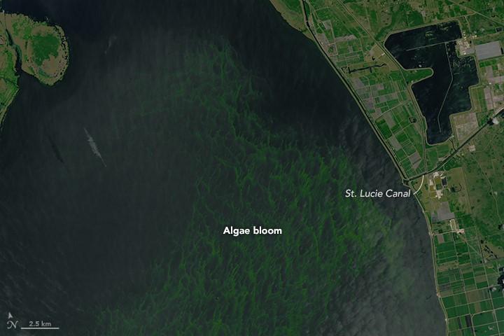 Algae bloom in Lake Okeechobee.