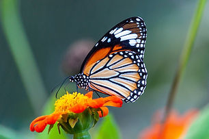 closeup-shot-beautiful-butterfly-with-in