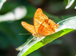 beautiful-yellow-butterfly-sitting-leaf.