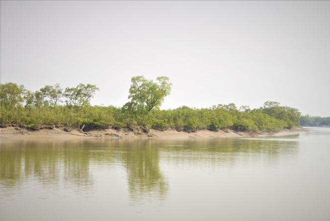 The Sundarbans mangrove forest, Bangladesh. ©Ruyel, 2019