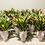 Thumbnail: 2-Dozen-Tulips in Monaco Vase