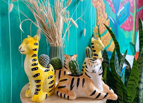 Tigers, Cheetahs, and Cacti - oh my!