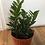 """Thumbnail: ZZ Plant - 10"""" Pot"""