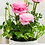 Thumbnail: 'Mom Blooms' Cosmo Collection Potted Ranunculus