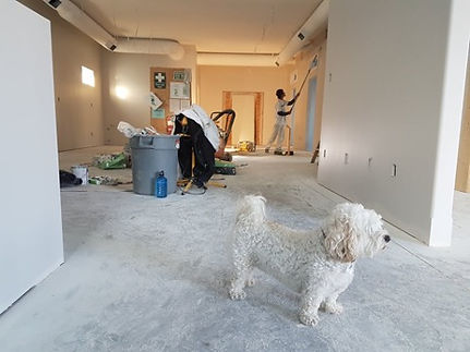 large hallway space during renovation, zero threshold hallway, man painting with extended paintbrush is in the background, small white poodle is in the forground