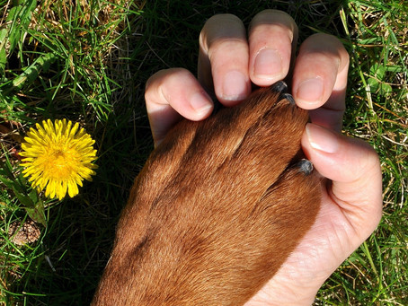 6 ways to reduce your ecological pawprint and celebrate Earth Day with your pup
