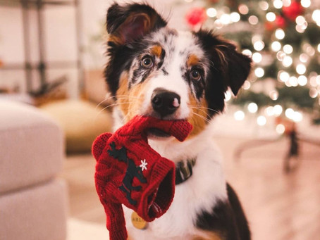 This 12 Days of Giving holiday event is helping Vancouver dogs in need