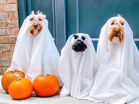 Trick or Treat with your pup at this socially distanced Halloween activity in Yaletown