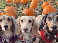 6 fun activities to do with your pup this fall