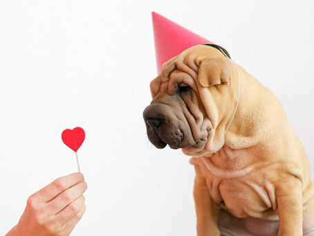 6 of the best local Valentine's Day gifts for dogs and dog lovers