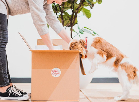9 BC pet companies making amazing products that dog owners need to know about