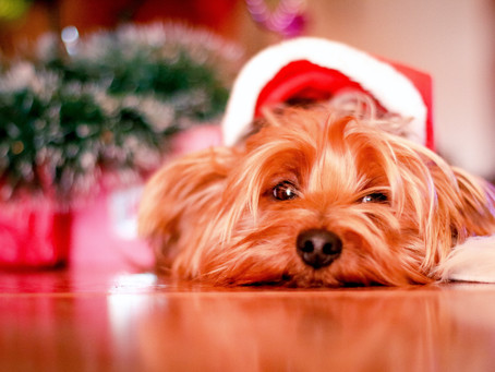 Gift Guide: 6 last minute gifts ideas from local businesses that you and your pup will love