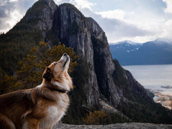 10 of the most Insta-worthy dog-friendly hikes near Vancouver