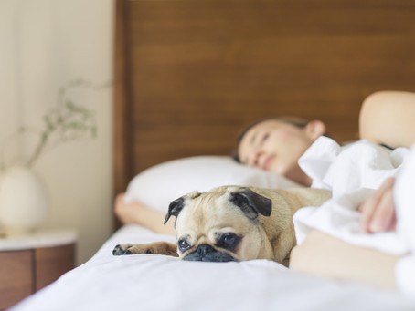 Here's a list of 12 dog-friendly apartment buildings in Vancouver