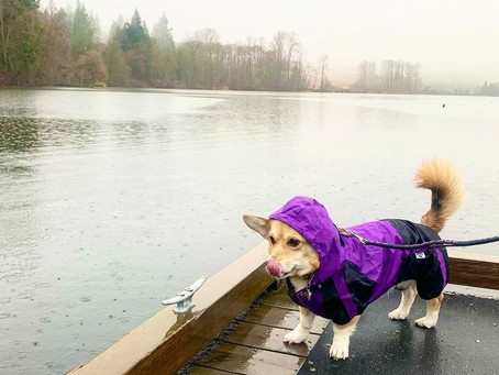 9 of the best rainy-day dog-friendly  hikes around Vancouver