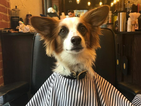 6 Vancouver hair salons that welcome your dog inside