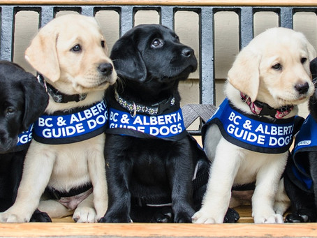 Annual Dash for Dogs fundraising event for guide dogs goes virtual this year
