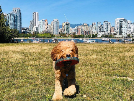 11 of the best off-leash dog parks around Vancouver
