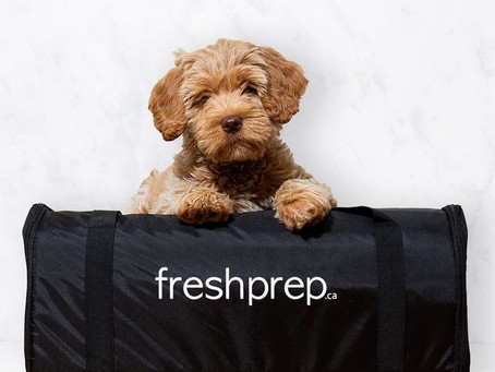 These Vancouver companies win April Fools' Day with hilarious dog-themed pranks