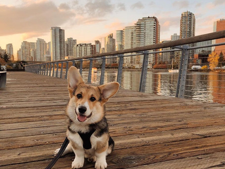 Adopting in a city? These 14 breeds make the best city dogs