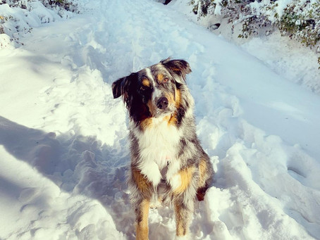 Pups enjoying early snowfall in Metro Vancouver this weekend that are too cute not to share
