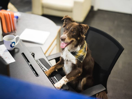 10 dog-friendly Vancouver companies hiring in November