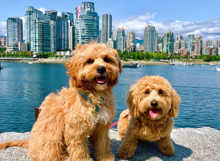 10 of the best dog parks in Vancouver