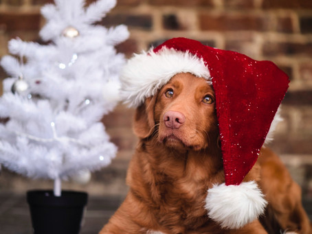6 dog-friendly ways to decorate your home for the holidays