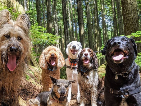 A Dog Therapy book combining cute Vancouver pups and words of wisdom is helping senior dogs in need