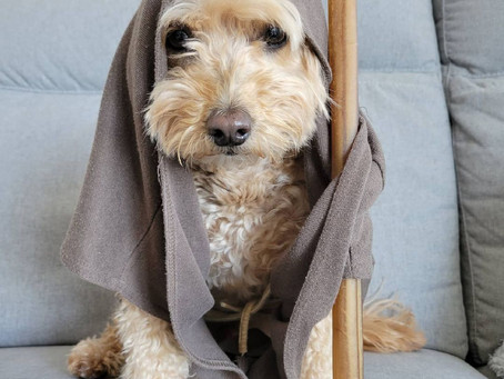 16 adorable Vancouver pups celebrating Star Wars Day in style