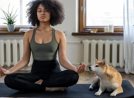 Vancouver dog-yoga enthusiasts wanted to star in Nissan commercial