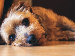 Heat stroke and your dog: How hot is too hot?
