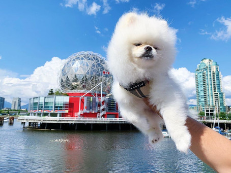 Vancouver ranked one of the top dog-friendly cities in the world