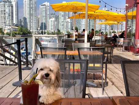 21 dog-friendly patios in Vancouver to visit if you want to support local