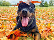 These Vancouver dogs enjoying fall will brighten up your day