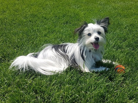 Heartbroken dog owner launches petition for separate play areas for small dogs in Vancouver parks