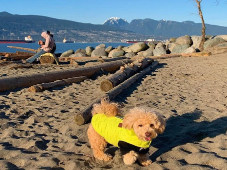 14 of the best dog beaches around Vancouver perfect for sunny days