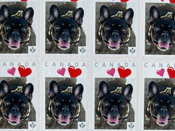 You can make your favourite dog photo into real Canada Post stamps