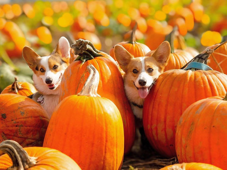 8 dog-friendly pumpkin patches to visit near Vancouver this fall