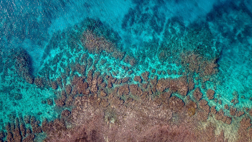 Aerial Photo of a Coral Reef