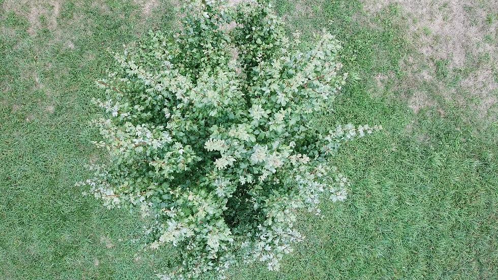 PRAerial video of a tree's top
