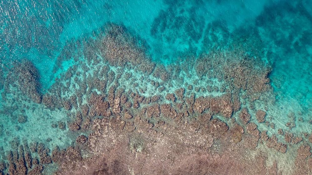 Taveuni Island Coral Reef