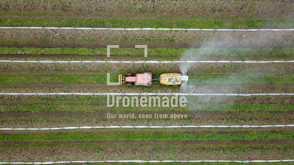 Tractor spraying crops with pesticides, drone view