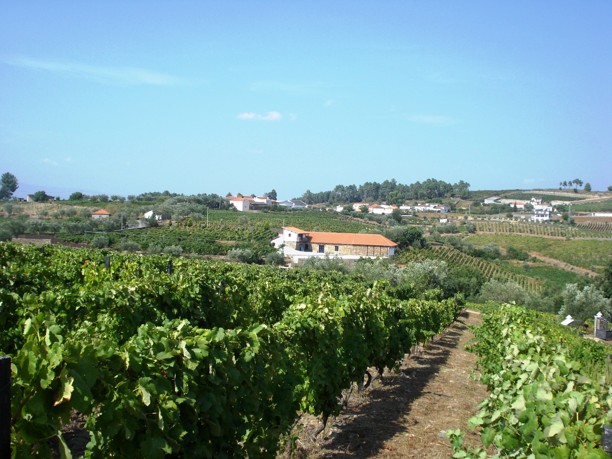 view from vines