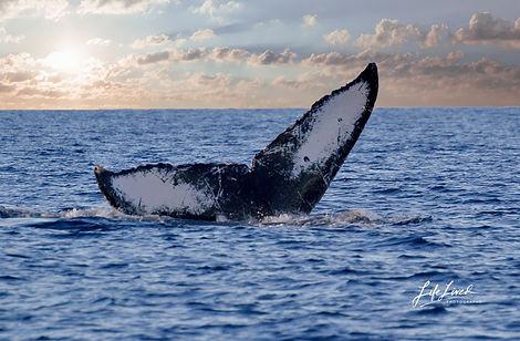 Whale Tail Maui1.jpg