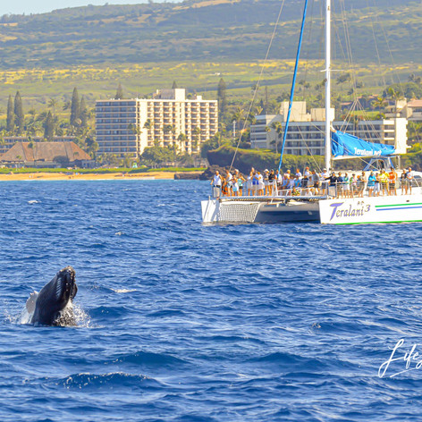 Maui Whale Mugging