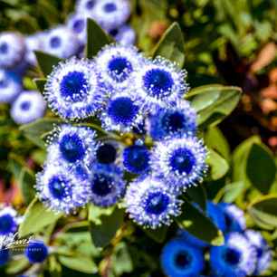 Fort Bragg Botanical Garden
