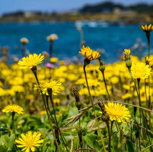 Fort Bragg Flowers