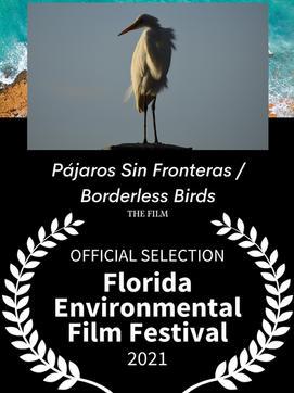 BORDERLESS BIRDS