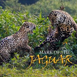 MARK OF THE  JAGUAR
